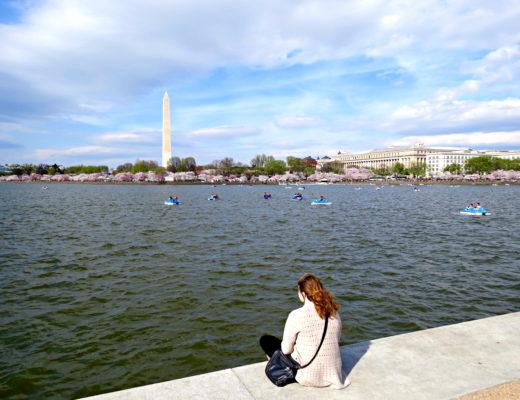 Washington DC Cherry Blossoms 1