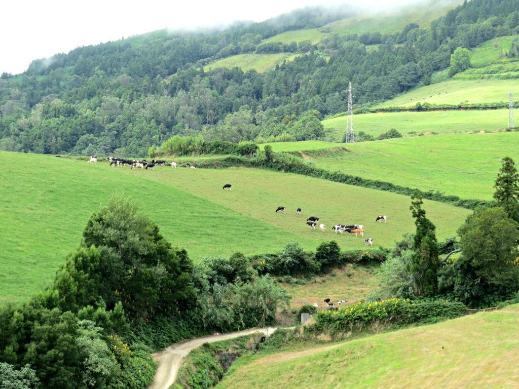 Vila Franca - Azores 13