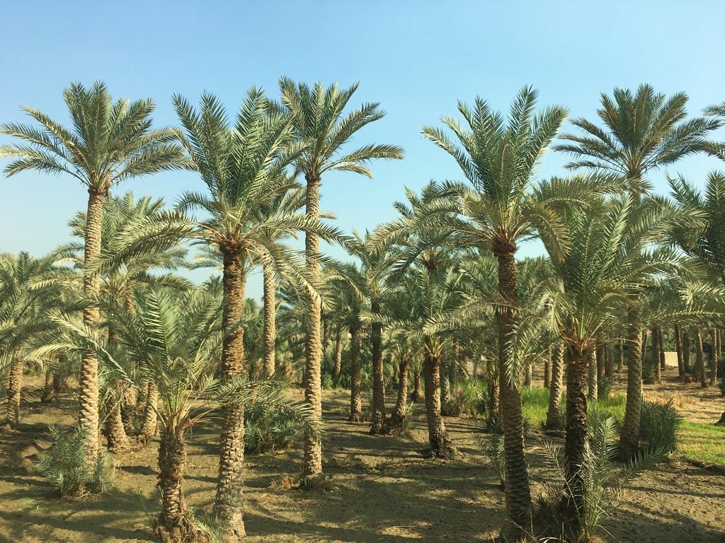 Saqqara 2