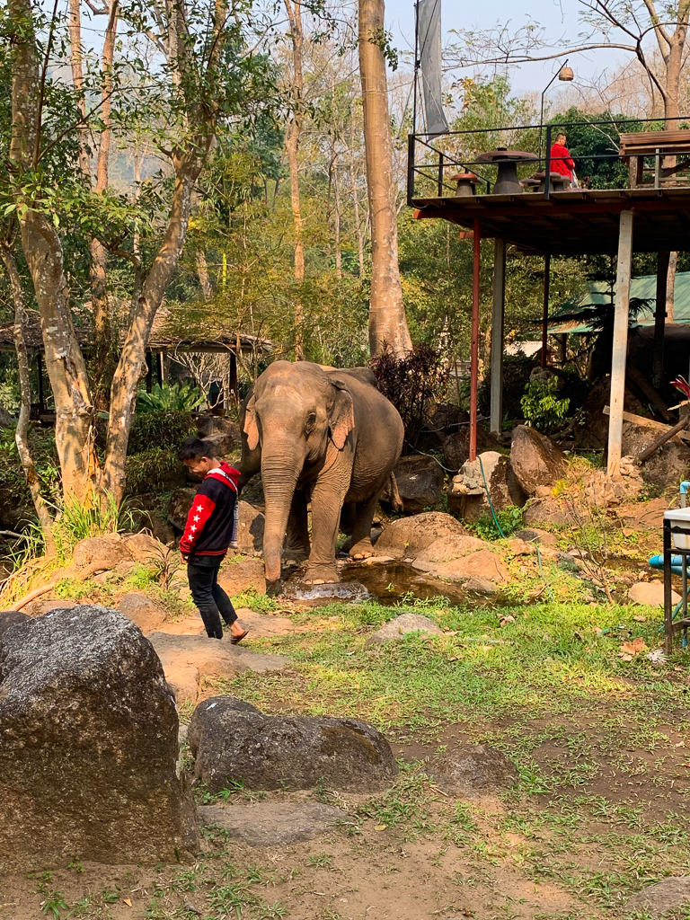 Elephants arriving