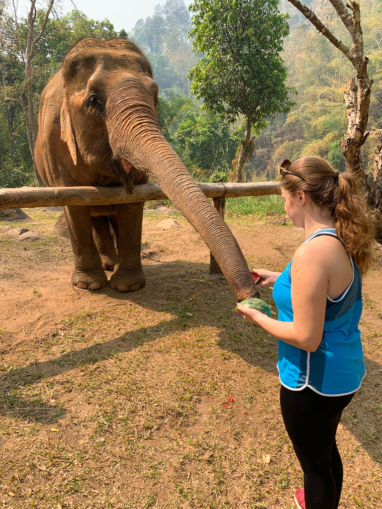 Feeding elephants 2