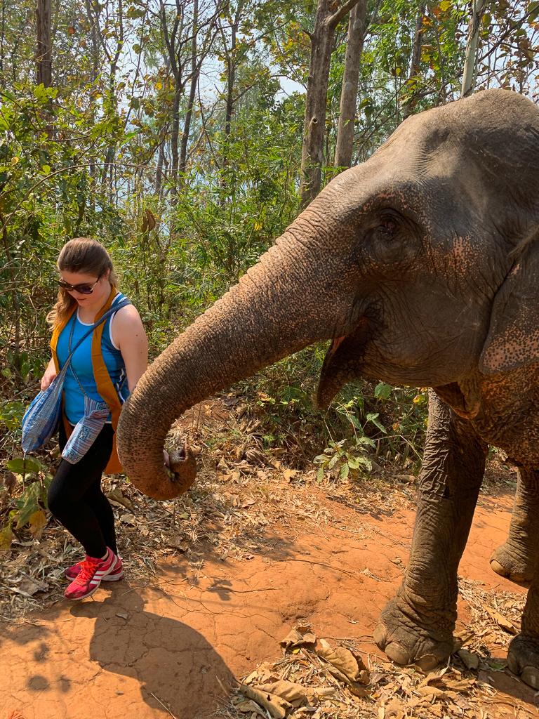 Feeding elephants 4