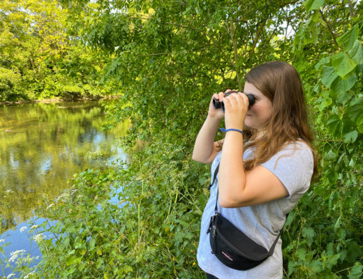Bird watching marshes