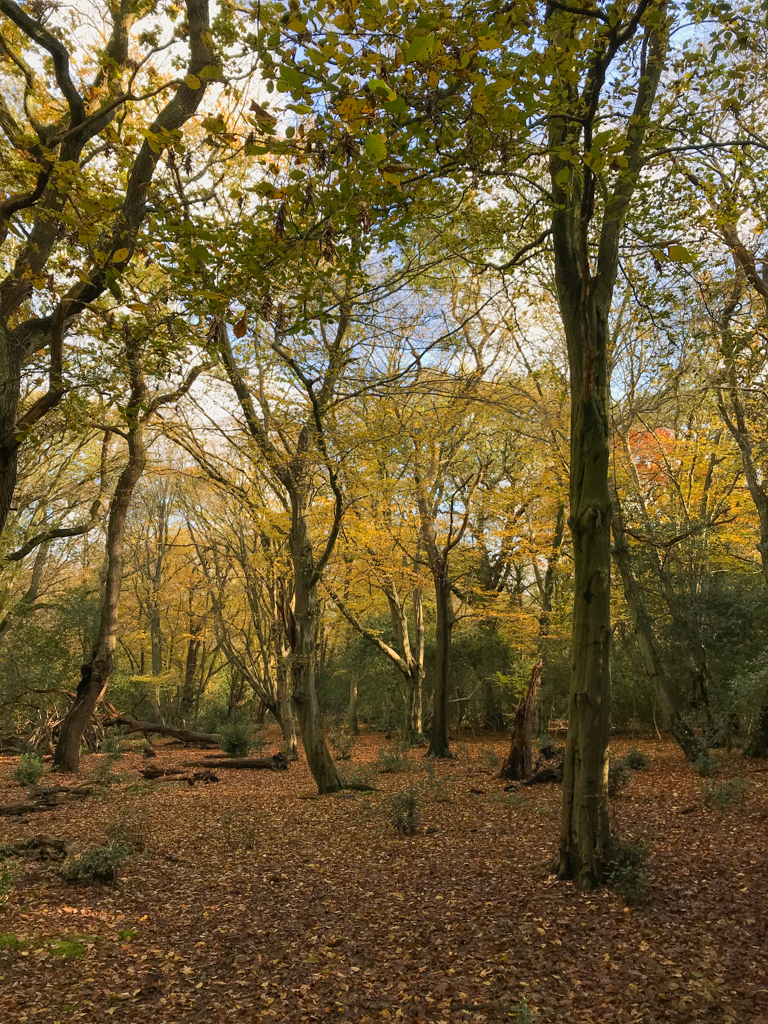 epping forest autumn