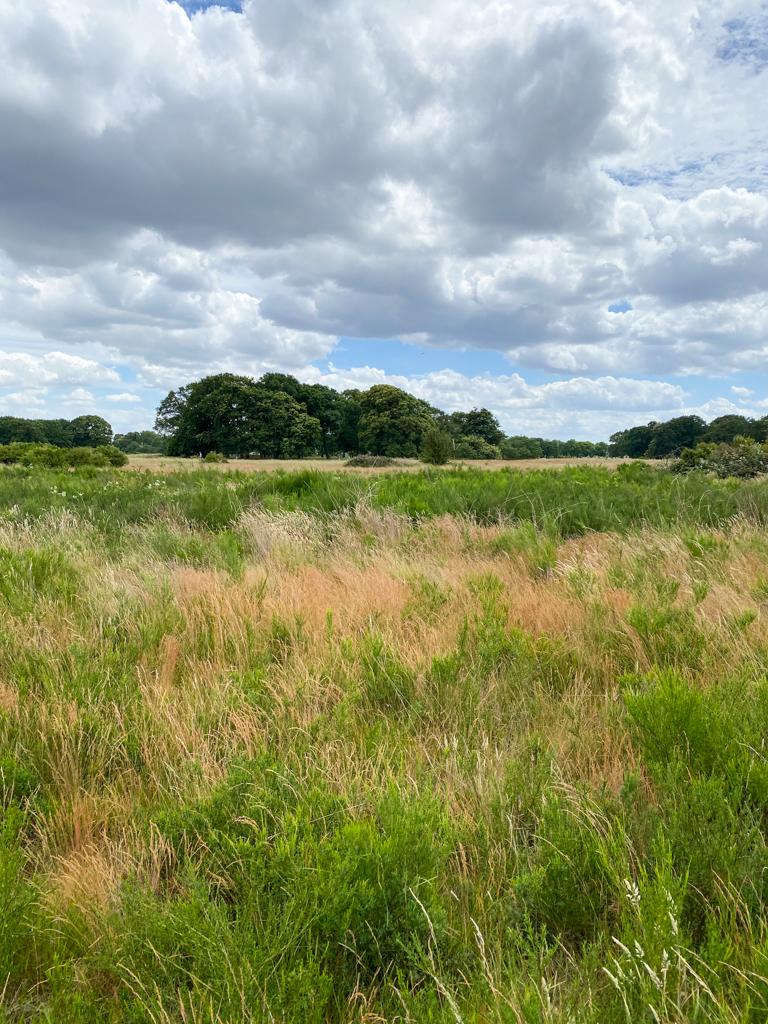 wanstead flats meadow