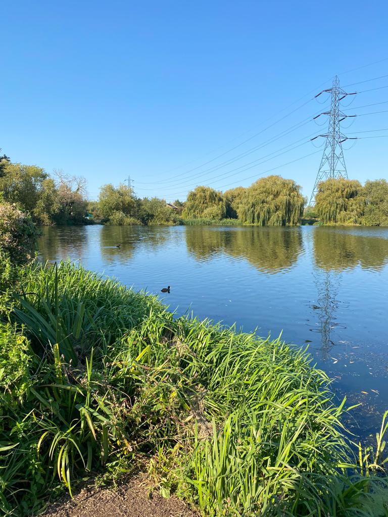 wetlands green