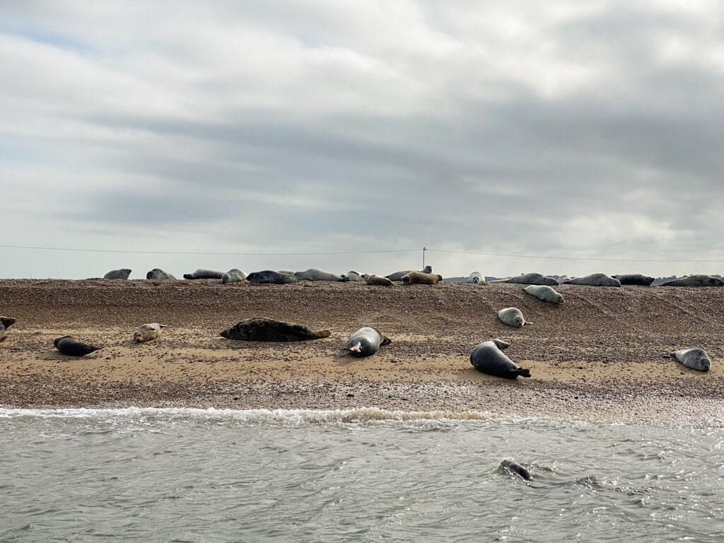 Norfolk seals